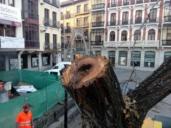 """Vea cómo estaban los árboles talados en la Plaza de Zocodover, """"el PP miente"""", dice el Gobierno"""