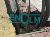 Un socavón de siete metros de profundidad se traga un árbol en Alameda de la Sagra (Toledo)
