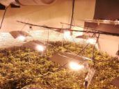 Desmantelan un laboratorio de marihuana en Magán (Toledo) con 886 plantas y que servía de punto de venta