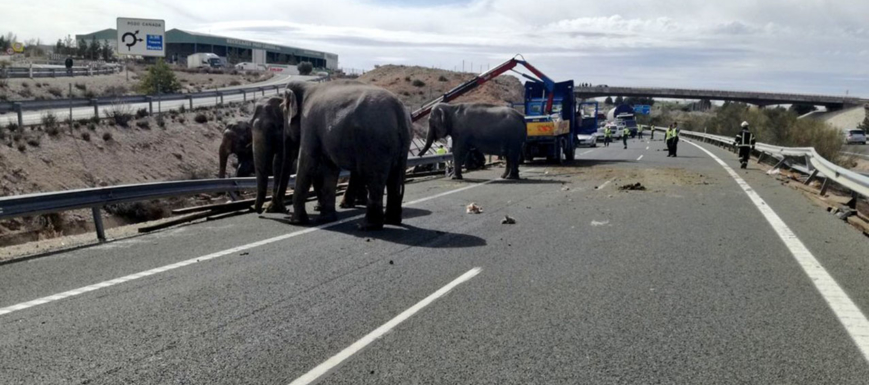 elefantes_pozo_canada1