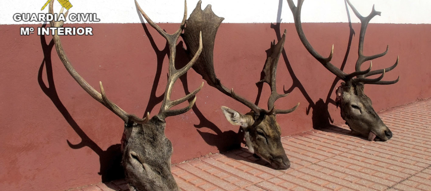 trofeos_furtivos_caza