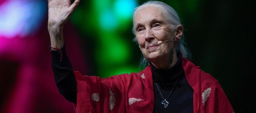 La primatóloga Jane Goodall